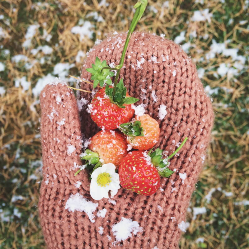 Comer Verduras en Invierno CasaFen - Photo by letterberry on Reshot