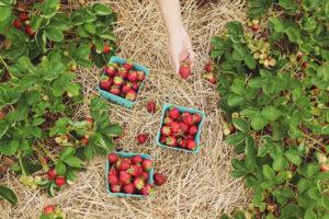 Dónde comprar productos orgánicos, naturales y saludables CasaFen - Photo by Farsai Chaikulngamdee on Unsplash