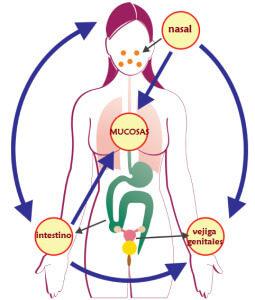 Sindrome de inflamacion de las mucosas, MALT, CasaFen
