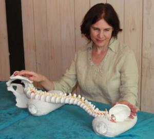 Terapia craneosacral biodinámica Dialogando con el cuerpo - CasaFen