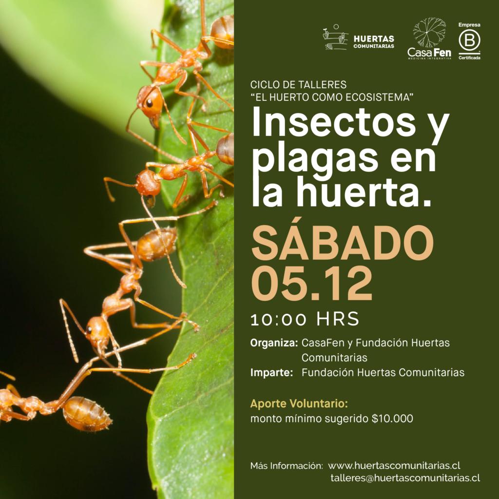 Taller de Huertos Insectos y plagas en la huerta-CasaFen
