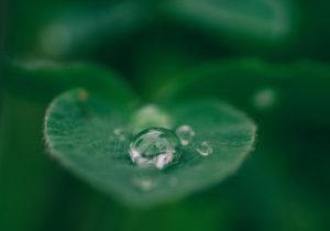 Mindfulness 15 minutos pueden mejorar tu calidad de vida y prevenir enfermedades CasaFen - Photo by Aaron Burden on Unsplash