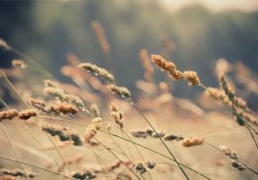 Respirar a nuestros aires de interdependencia - CasaFen (2)
